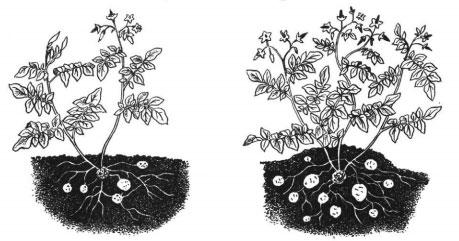Агроприем