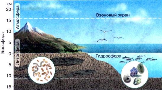 Биосфера — область распространения жизни
