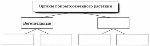 Схема органы покрытосеменного растения