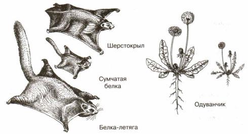 Рисунок, иллюстрирующий примеры морфологического сходства и различия у животных и растений