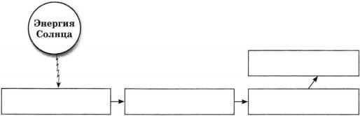 Схема Пищевая цепь