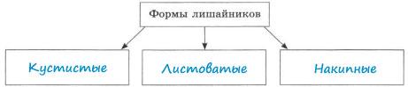 Заполненная схема Формы лишайников